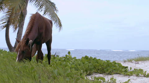 Tied horse eating grass on the shore Footage