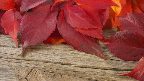 Autumn leaves on old wood background Live Action