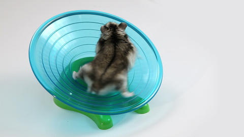 Hamster Exercise Wheel stock footage