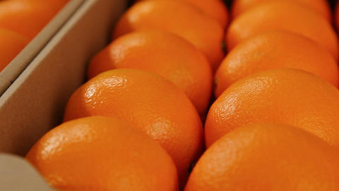 Orange fruits in market box Footage