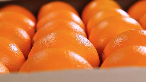 Orange fruits dolly shot Footage