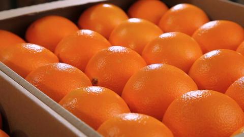 Beautiful oranges in box Footage