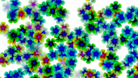 color wild flower flow... Stock Video Footage