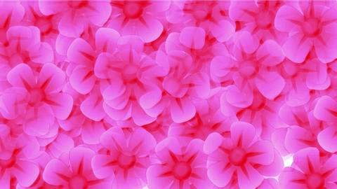 pink wild flower flow background.bloom,bouquet,floral,love,petals,romance Animation