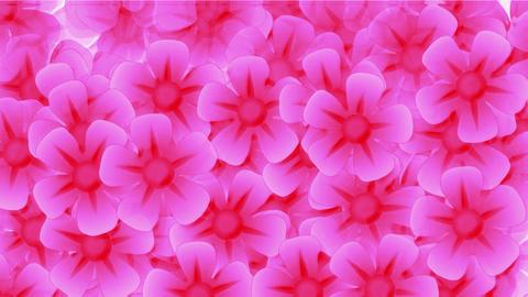 pink wild flower flow... Stock Video Footage