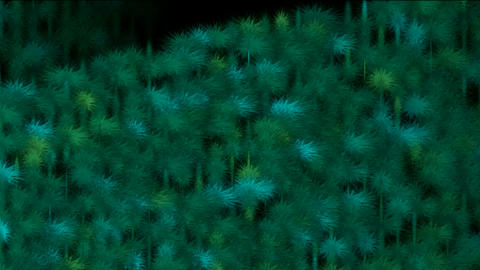Coniferous,tree,Plants,flowers,moss,garden,park,grass,gro... Stock Video Footage