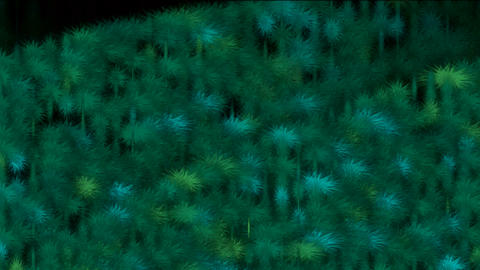 Coniferous,tree,Plants,flowers,moss,garden,park,grass,ground,agriculture,agricultural,food,material Animation