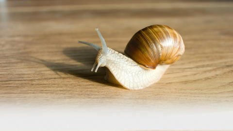 Land snail Footage