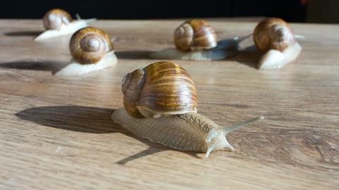 Walking snails Footage