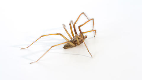 Close Up Spider, White Background stock footage