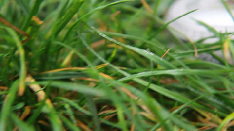 A Wedding Rings In The Grass On Casket stock footage