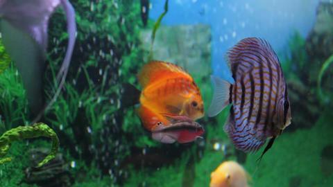 an aquarium with fish Live Action