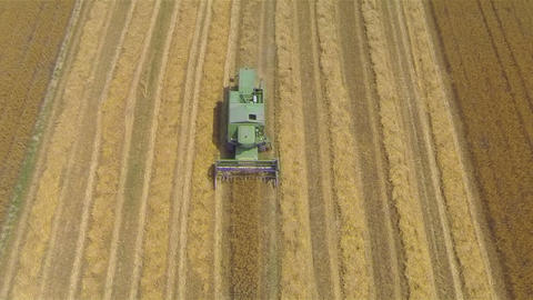 AERIAL: Combine harvesting crop on a field ビデオ