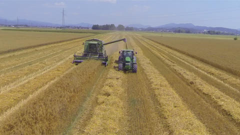 AERIAL: Combine harvester loading wheat grains in  Footage