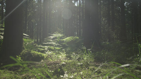 SLOW MOTION: Sunny forest ground in early spring Footage