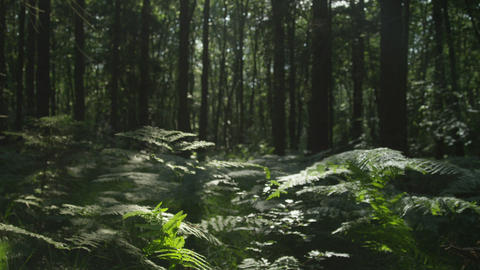 SLOW MOTION: Walking through mysterious forest Footage