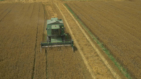 AERIAL: Harvester pinking wheat grains in a field Footage