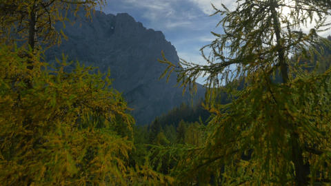 AERIAL: Flying between two colorful larches on mou Footage
