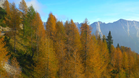 AERIAL: Amazingly colored autumn forest in the mou Footage
