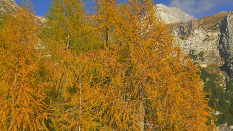 AERIAL: Amazing Colors Of Autumn In The Mountains stock footage