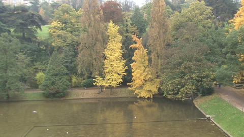 Chaumont Park Alley Autumn Leaves Footage