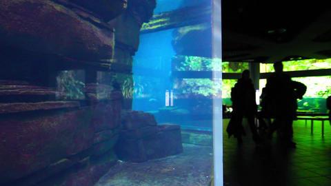 People Visit The Aquarium stock footage