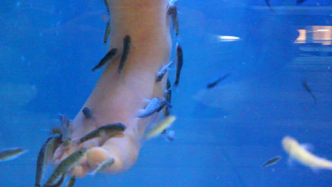 Fish therapy.Fish spa beauty treatment.Fish spa pe Live Action