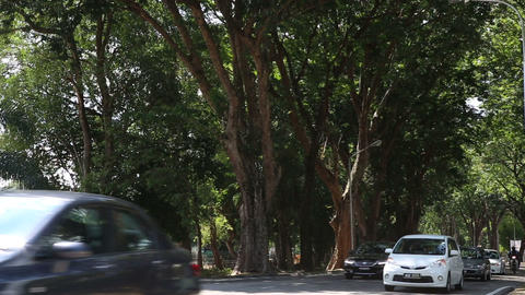 cars go along city road between green trees Footage