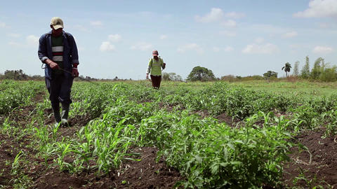 Pests In Agriculture Men At Work As Peasants Spray Footage