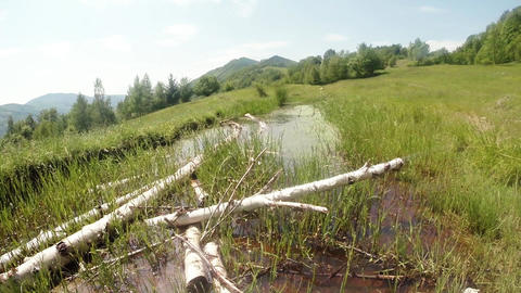 dragonflies fly over the pond, old birch lie in wa Footage