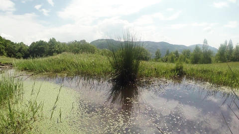 dragonflies fly over the green mountain pond in a  Footage