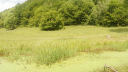 green forest, green grass and green duckweed on th Footage