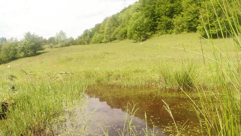 dragonfly flying over a mountain pond overgrown wi Footage