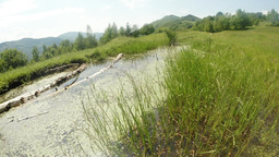 mountain lake overgrown with grass, fly dragonfly Footage