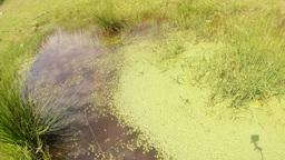 like yin and yang, mountain marsh dragonfly half o Footage