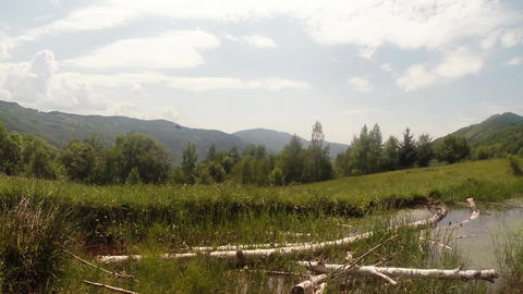 panorama of mountain bogs in which lie the old bir Footage