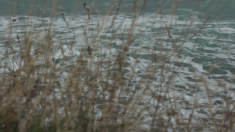Follow Focus From Yellow Grass To Wavy Sea stock footage