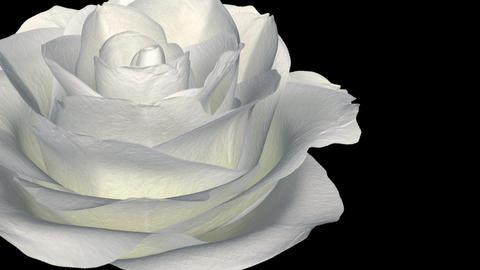 White Rose - Left Transition - Alpha Animation