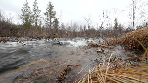 Fast Stream In The Taiga stock footage