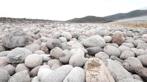 boulders beach on shore of Barents sea Live Action