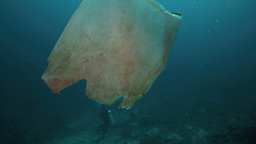 Plastic Bag Floating In Ocean At Bunaken Island stock footage