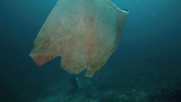 Plastic Bag Floating In Ocean At Bunaken Island stock footage