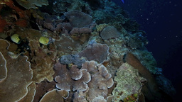 Coral Reef In Bunaken National Park stock footage