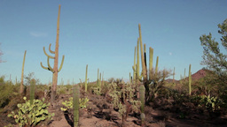 Arizona Saguaro National Park United States Of Ame stock footage