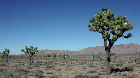Joshua Tree National Park California United States stock footage