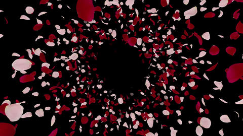 Rose petals mix front Bb 4 K Animation