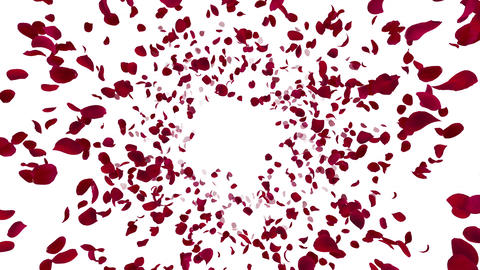Rose petals red front Bw 4 K Animation