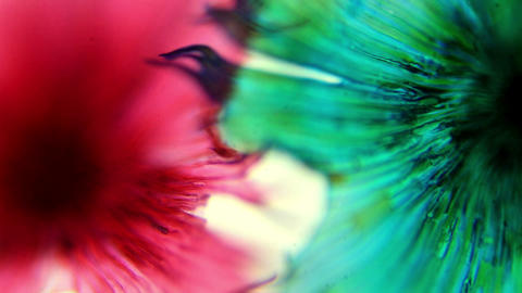 Cactus pollen under a microscope, (Stellato-Pilosu Live Action