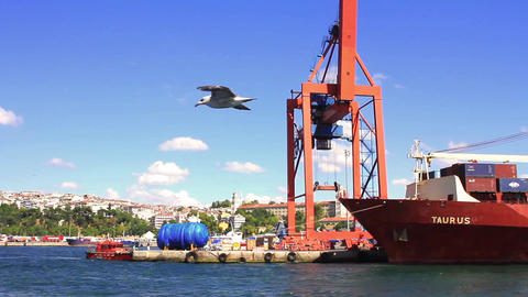 Sea birds flying happily in harbor Footage