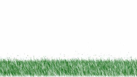 fresh spring grass,depth of... Stock Video Footage